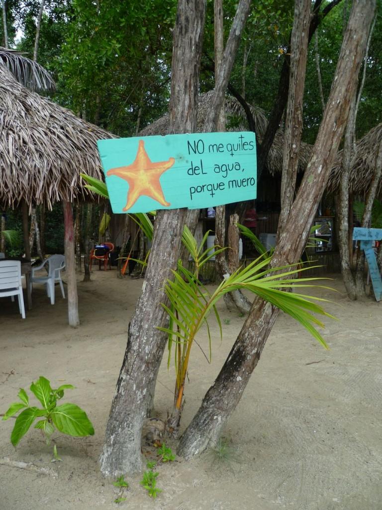 Playa de las Estrellas: 1