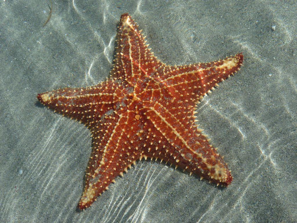 Playa de las Estrellas: 3
