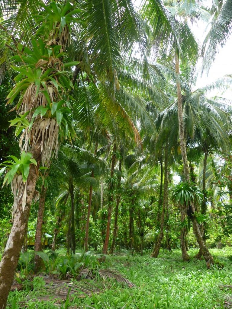 Isla Zapatilla 3: interior