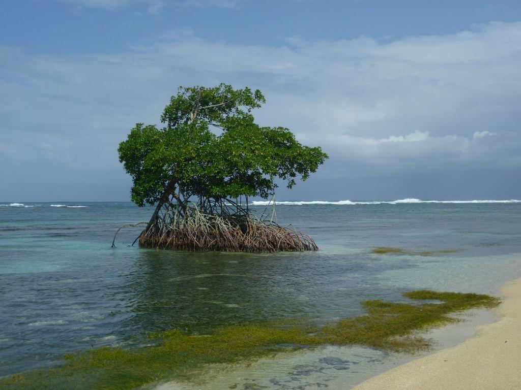 Isla Zapatilla 6