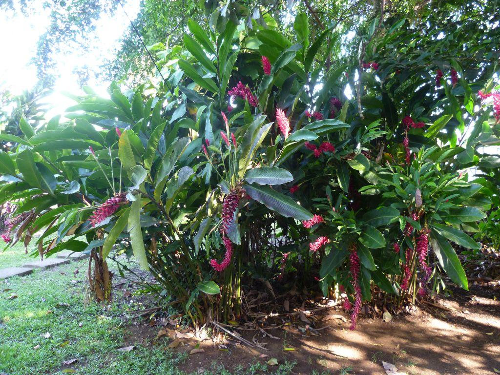 La Shangria Hostel: a bush in the garden