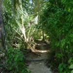 Cahuita National Park: trail