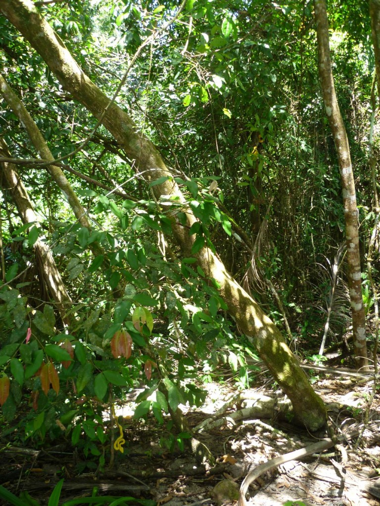 Cahuita National Park: snake hanging on a branch