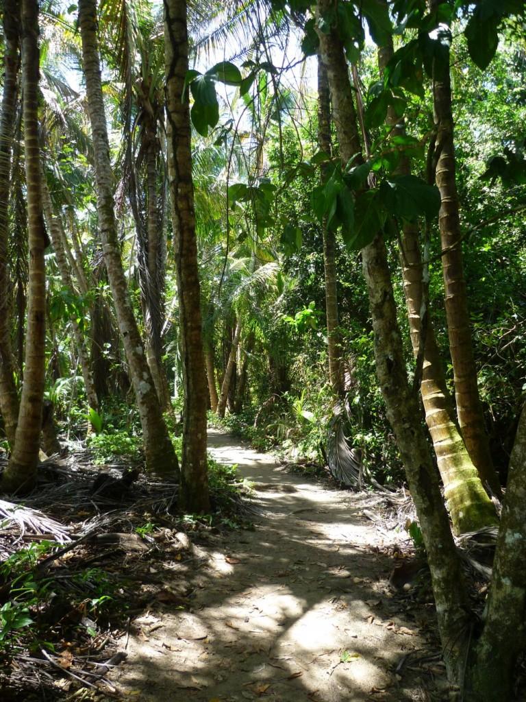 Cahuita National Park: trail