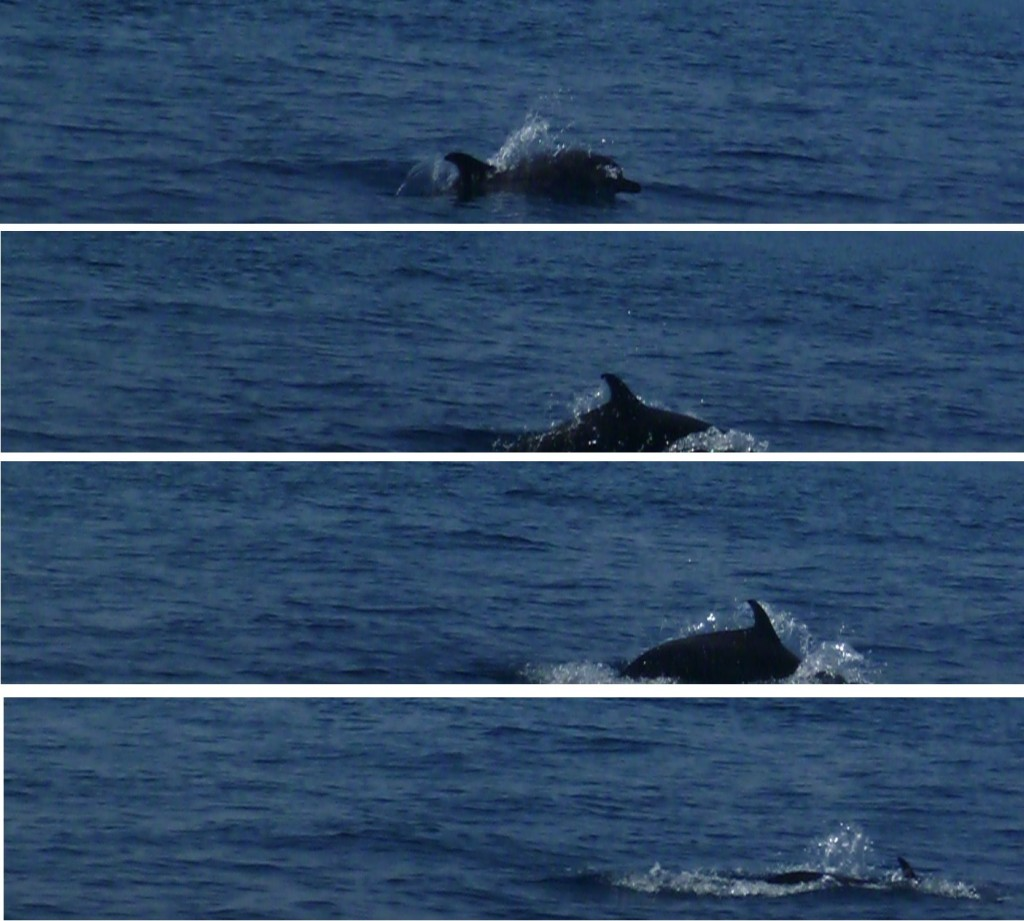 Boat trip 1: dolphins