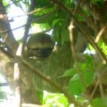 Parque Nacional Manuel Antonio 4: sloth