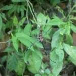 Parque Nacional Manuel Antonio 3: spider