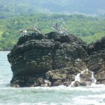 Boat trip 3: pelicans