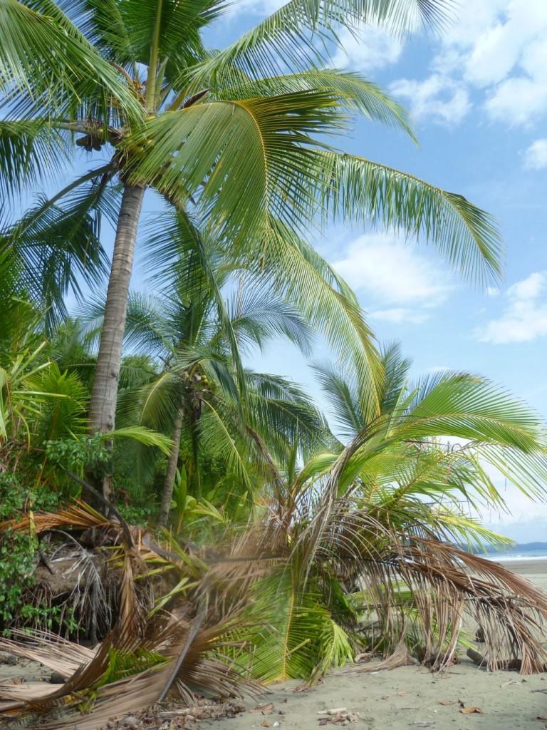 Parque Nacional Marino Ballena 3: beach