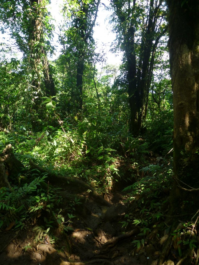 Isla de Ometepe 2: trail to the summit of volcan Maderas