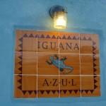 Iguana Azul 1: welcome
