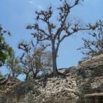 Copán Ruinas 2
