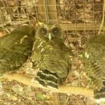 Parque de Aves 6
