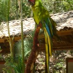 Parque de Aves 1