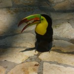 Parque de Aves 3