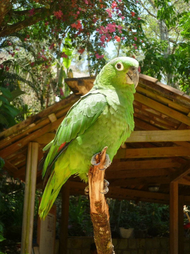 Parque de Aves 2