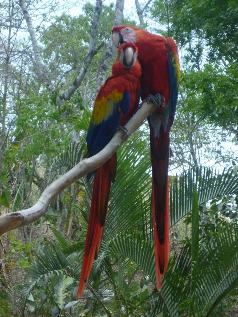 Parque de Aves 5