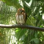 Parque de Aves 8