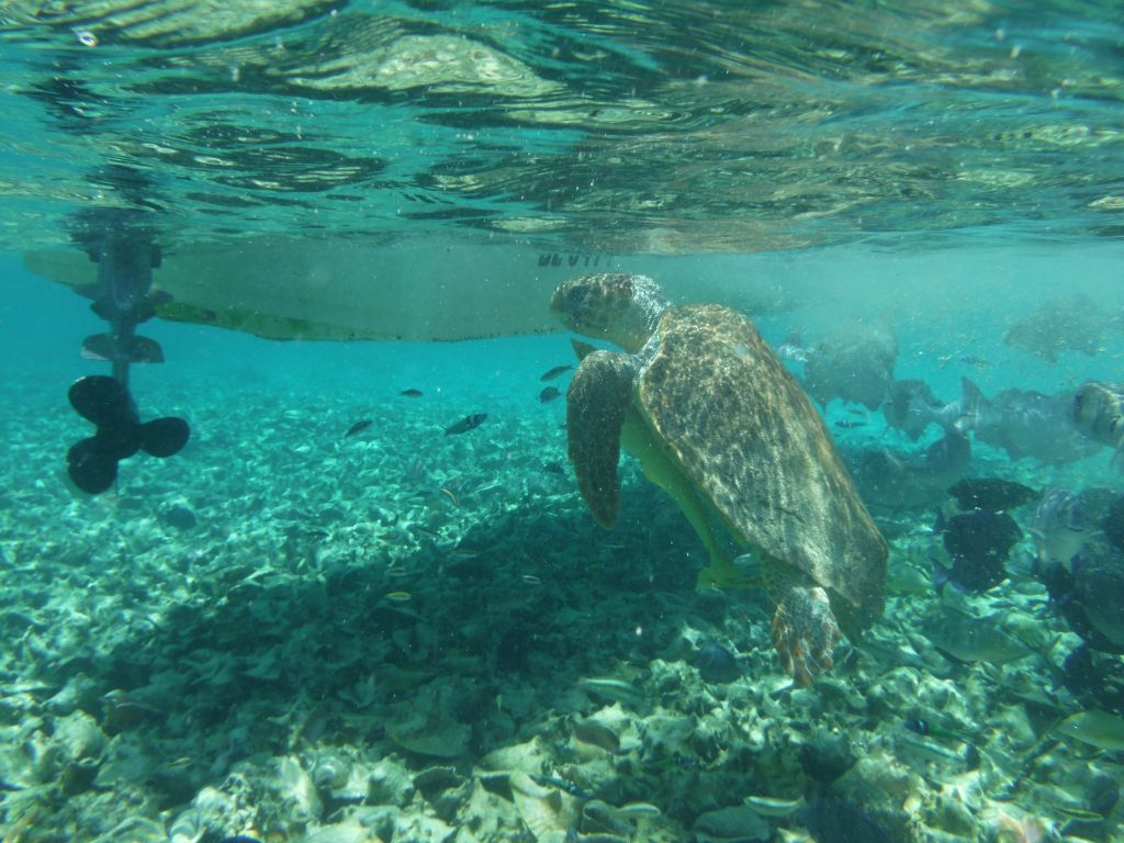 Sailing trip 5: sea turtle (picture taken by Cathryn)