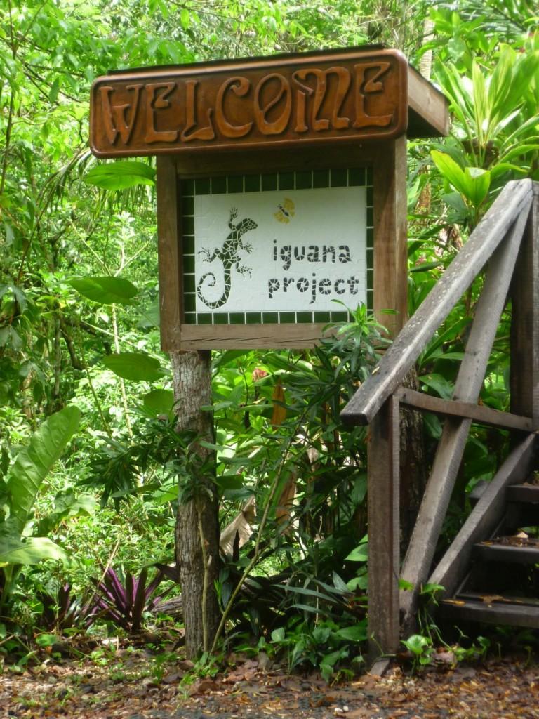 Iguana Breeding Station 1