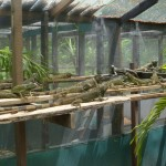 Iguana Breeding Station 2
