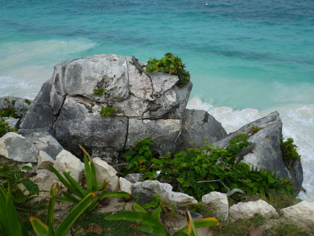 Tulum 6: iguanas on a rock bathing in the sun