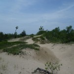 Sandbanks Provincial Park 2: some of the sanddunes