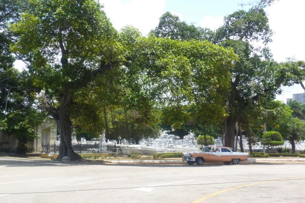 Auf dem Friedhof in Havanna, der auch als Übung in frommen Exzessen bezeichnet wird