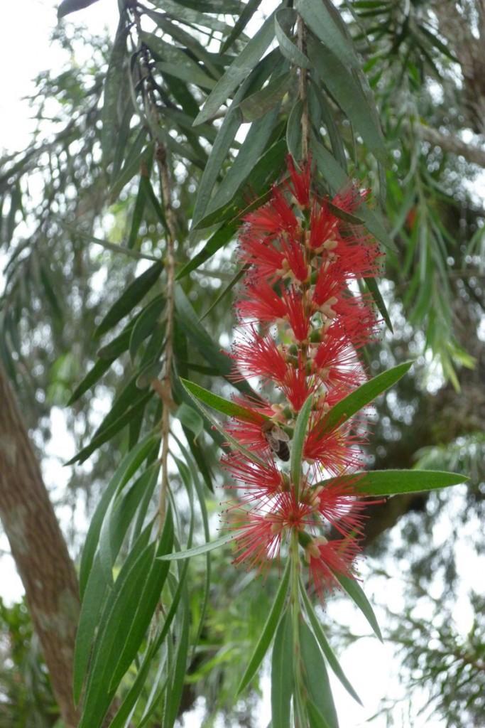 Es gibt auch Pflanzen, die wird noch nicht final identifiziert haben.