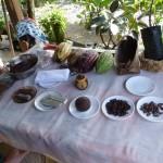 Auf der Kakaoplantage